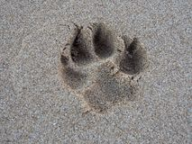 Dog Paw Print in the Sand. Large Dog Paw Print in the Sand Royalty Free Stock Images