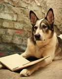 Large Dog Reading. Malamute dog posing with a book on his paws Royalty Free Stock Images
