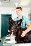 Large Dog at Small Animcal Clinic Stock Images