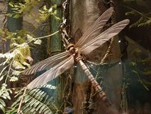 Large dragonfly on tree Royalty Free Stock Photography