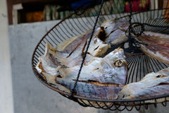 Large dried fish. Large dried flat fish in a metal wire basket in the market in Thailand royalty free stock images