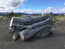 Driftwood on Otaki beach, New Zealand royalty free stock photos