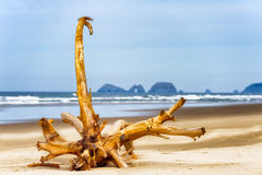 Driftwood on beach at Cape Lookout Oregon Coast. A large driftwood lies on the deserted sandy beach at Cape Lookout on the Oregon Coast Stock Images