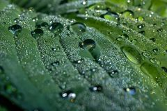 Rain drops. Leaf of a plant. The large drops of a rain lying on a leaf of a plant Stock Photos