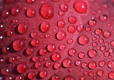 Rain drops on a peony petal stock image