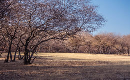Large dry forest Stock Photos