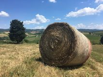 Rural landscape of summer fields of Tuscany royalty free stock photo