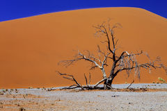 Large dune No. 44, Sossusvlei Namibia Stock Images