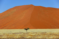 Large dune small tree Stock Photo