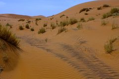 Large dunes in the Sahara deformed by the wind, Morocco Stock Photos