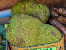 Large durian sitting in box at outdoor grocery store farmers market royalty free stock images