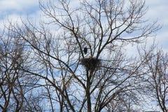 Large Eagles Nest Stock Image