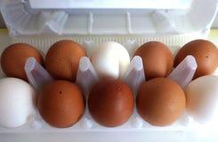 Large eggs royalty free stock image