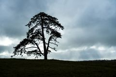 Large elegant tree with negative space stock photos
