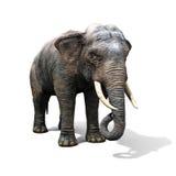 Large elephant isolated on a white background Royalty Free Stock Photo