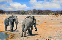 2 Large Elephants at a waterhole in Etosha Stock Photo