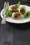 Large Escargots de Bourgogne - Snails baked  garlic butter, with Royalty Free Stock Photo