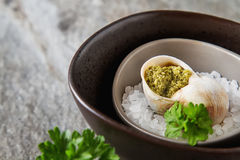 Large Escargots de Bourgogne - Snails baked  garlic butter, with Royalty Free Stock Photography