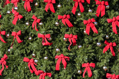Large Evergreen With Red Bows Stock Image