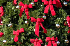 Large Evergreen With Red Bows Royalty Free Stock Image