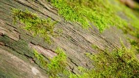 Large fallen tree overgrown with green moss. Macro shot. Top view.
