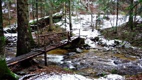 Large fallen trunk of spruce, fir in the woods, mountain river, stream, creek with rapids in late autumn, early winter. Large fallen trunk of spruce, fir in the stock video