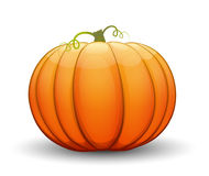 A large festive pumpkin. Vector illustration. In cartoon style Stock Images