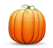 A large festive pumpkin. Vector illustration in cartoon style Stock Image
