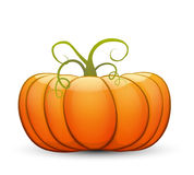 A large festive pumpkin. Vector illustration in cartoon style Stock Images