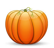 A large festive pumpkin. Vector illustration in cartoon style Stock Photos