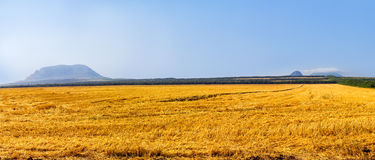 Large field after harvest. Royalty Free Stock Photo