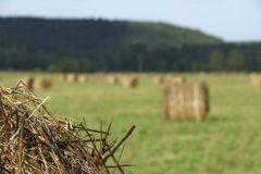 A large field with lots of hay stacks to preparations for the winter stock image