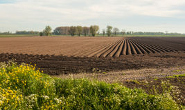 Large field after planting potatoes Stock Photo