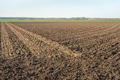 Large field plowed in two directions. Large flat field in the Netherlands. The field is plowed in two directions and now ready for the new growing season. It is Stock Image