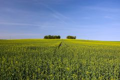 Large field of and copse. On the horizon and blue sky stock photos