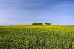 A large field of and trees. On the horizon and blue sky royalty free stock photography