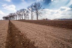 Large field Stock Photo