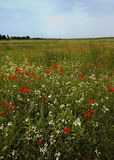 A large field of spring flowers royalty free stock image
