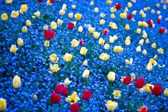 Large filed with colored flowers Royalty Free Stock Photo