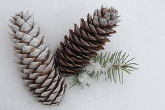 large fir cones on a background of white snow Stock Images