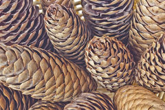 Large fir cones in a basket. A lot of fir cones on a white background Stock Image