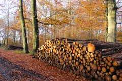 Large firewood stack Royalty Free Stock Photography