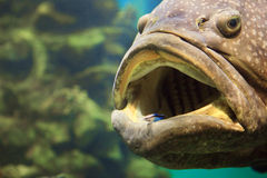 A large fish stock image