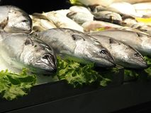 Large Fish For Sale In Faro Portugal. Large fish for sale at indoor market in the Algarve in Faro Portugal stock image