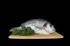 Large fish sea bream orata gutted Royalty Free Stock Image