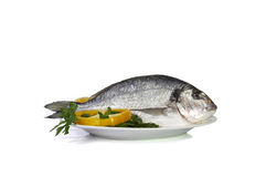 Large fish sea bream orata gutted Stock Photos
