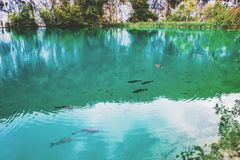 Free Large Fish Swim On One Of The Plitvice Lakes. Surprisingly Clean And Transparent Lakes Of Croatia. A Truly Pristine And Wonderful Royalty Free Stock Image - 159192936