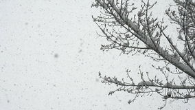 Large Flakes of Snow stock video footage