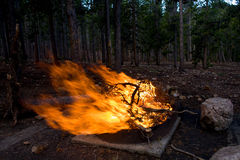 Large Flaming Campfire in a Forest. This campfire is flaming high fueled by sticks and branches Stock Image
