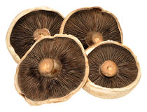 Large Flat Mushrooms Royalty Free Stock Image